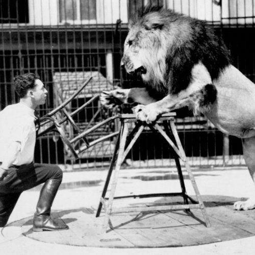 Planowanie kariery, sceny z życia poskramiacza lwów
